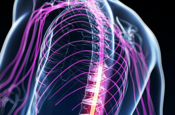nervous-system-1